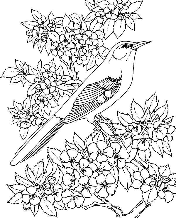 Mockingbird, Amazing Animal Mockingbird Coloring Pages: Amazing Animal Mockingbird Coloring Pages