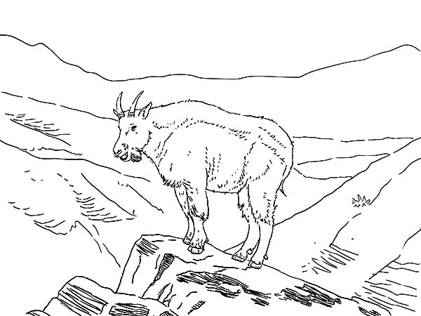 Mountain Goat, Amazing Animal Mountain Goat Coloring Pages: Amazing Animal Mountain Goat Coloring Pages