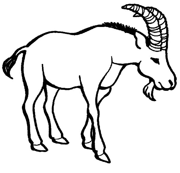an old goat coloring pages - Coloring Page Goat