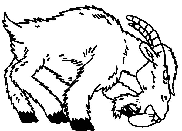 Goat, Angry Goat Coloring Pages: Angry Goat Coloring Pages