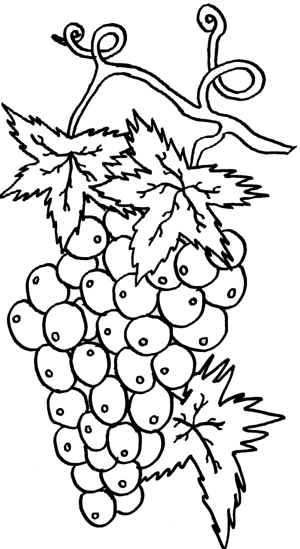 Grapes, Best Grapes For Wine Coloring Pages: Best Grapes for Wine Coloring Pages