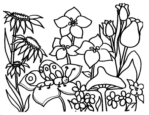 butterfly garden kit coloring pages - photo#22
