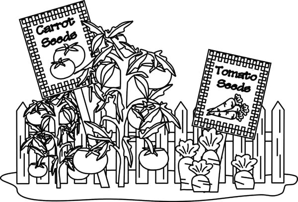 carrot and tomato garden coloring pages - Garden Coloring Pages