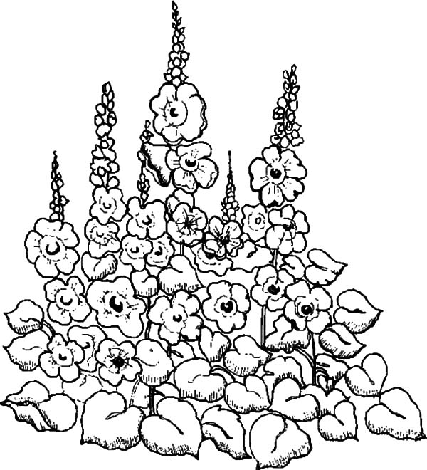 flower garden coloring page - drawing garden of flower coloring pages color luna