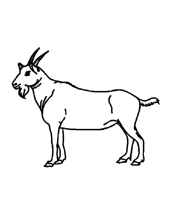 Goat, Drawing Goat Coloring Pages: Drawing Goat Coloring Pages