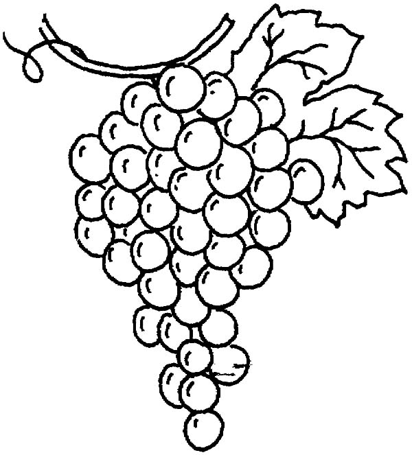 drawing grapes coloring pages - Grapes Coloring Page
