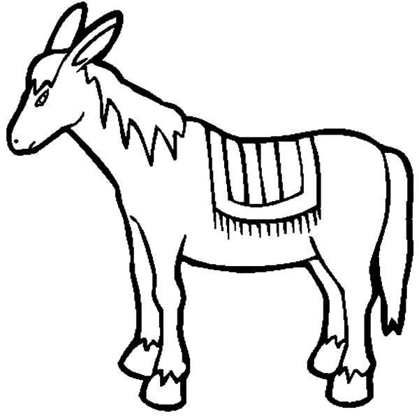 Mexican Donkey, Drawing Mexican Donkey Coloring Pages: Drawing Mexican Donkey Coloring Pages