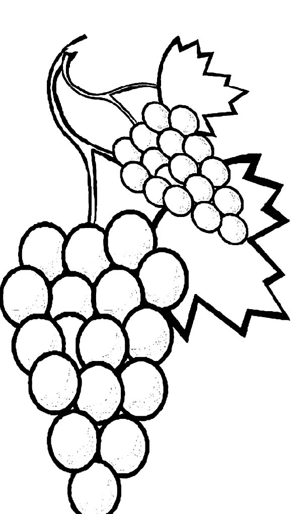Grapes, Favorite Fruits Sweet Grapes Coloring Pages: Favorite Fruits Sweet Grapes Coloring Pages