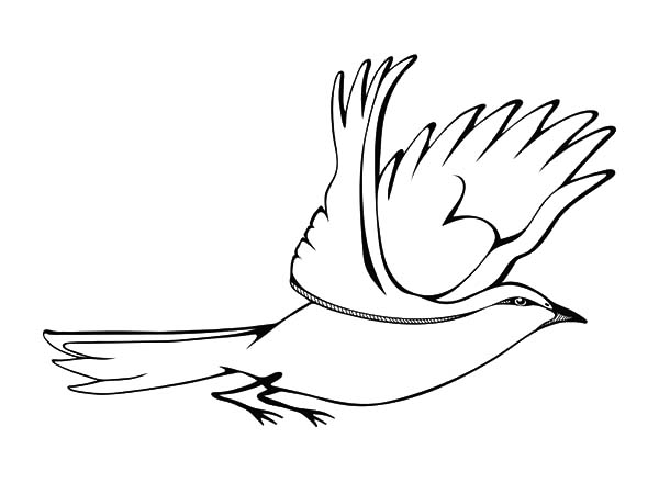 Flying Mockingbird Coloring Pages