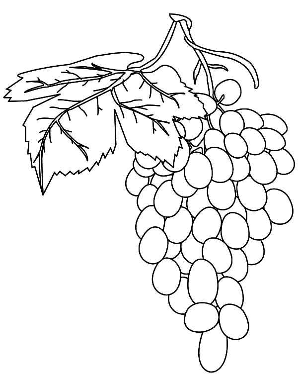 Grapes, Fresh Fruit Grapes Coloring Pages: Fresh Fruit Grapes Coloring Pages