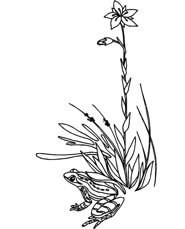 Grass, : Frog Hide Under Grass Coloring Pages