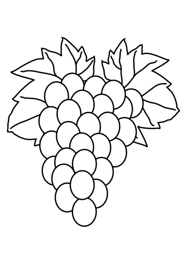 Grapes, Fruit Grapes Coloring Pages: Fruit Grapes Coloring Pages