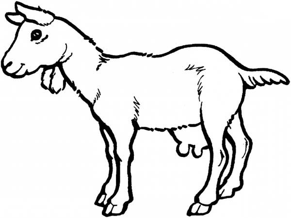 g for goat coloring pages - photo #41