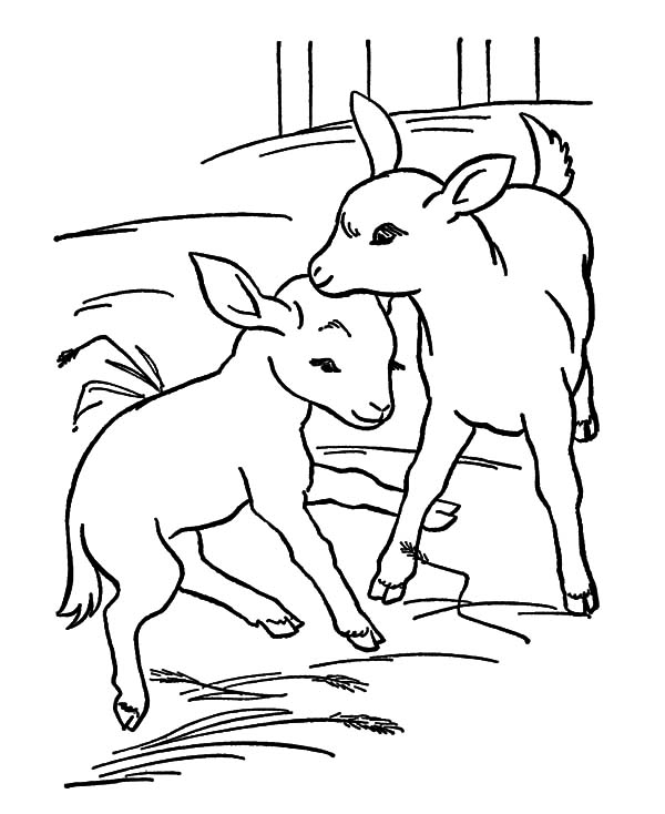 Goat Couple Coloring Pages
