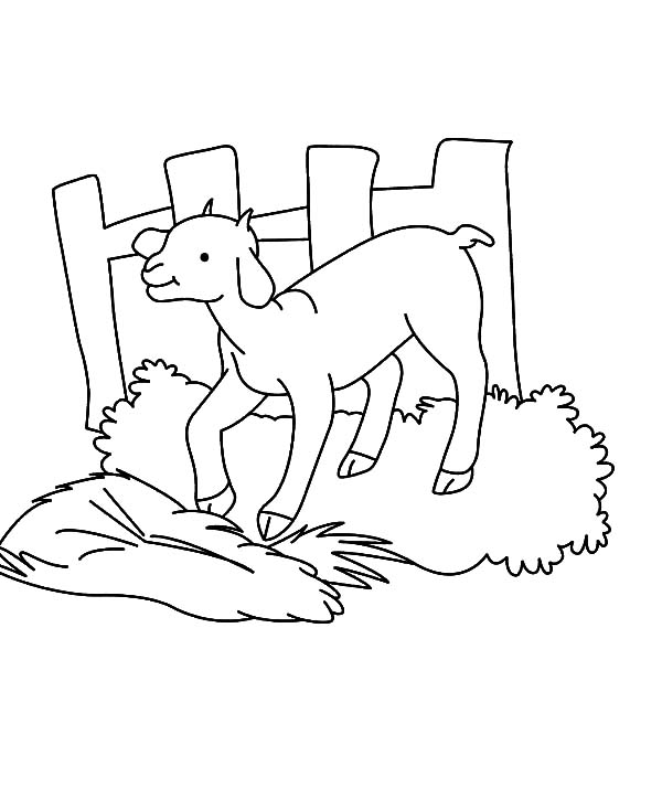 Goat, Goat Stepping On Grass Coloring Pages: Goat Stepping on Grass Coloring Pages