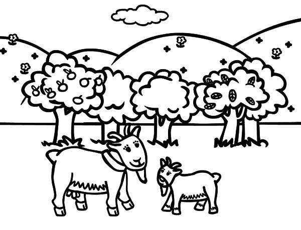 Goat, Goat Tale Coloring Pages: Goat Tale Coloring Pages