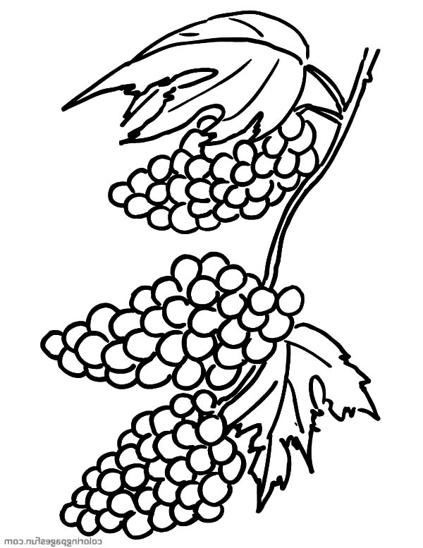 Grapes, Grapes Clusters Coloring Pages: Grapes Clusters Coloring Pages