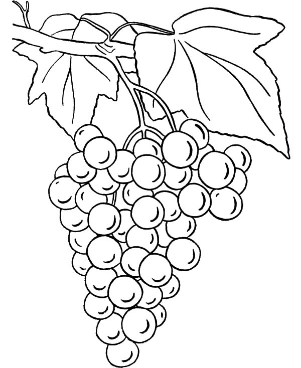 Grapes Coloring Pages for Kids Color Luna