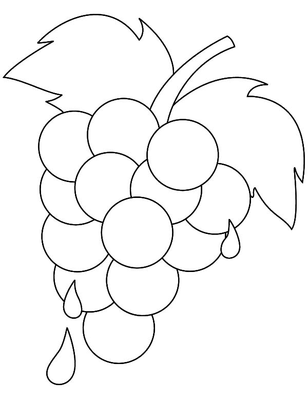 Grapes, : Grapes Extract Coloring Pages