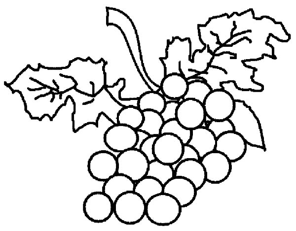 Grapes, : Grapes Therapy Coloring Pages