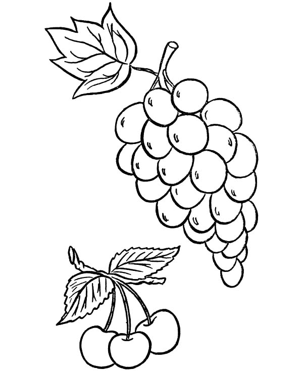 Grapes, Grapes And Cerry Coloring Pages: Grapes and Cerry Coloring Pages