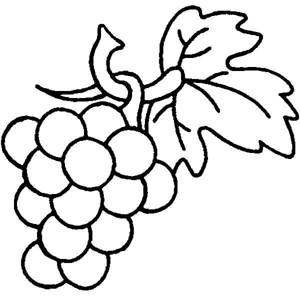 Grapes, : Grapes are Berry Family Coloring Pages