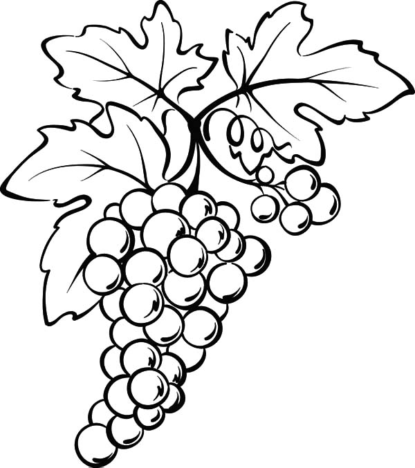 Grapes From Spain Coloring Pages PagesFull Size Image