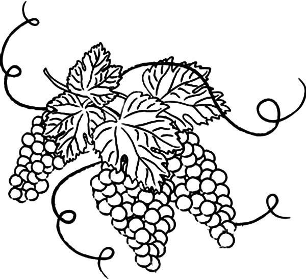 Grapes, : Grapes with Leaves Coloring Pages