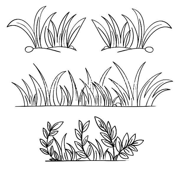 Grass, : Grass Grow so Well Coloring Pages