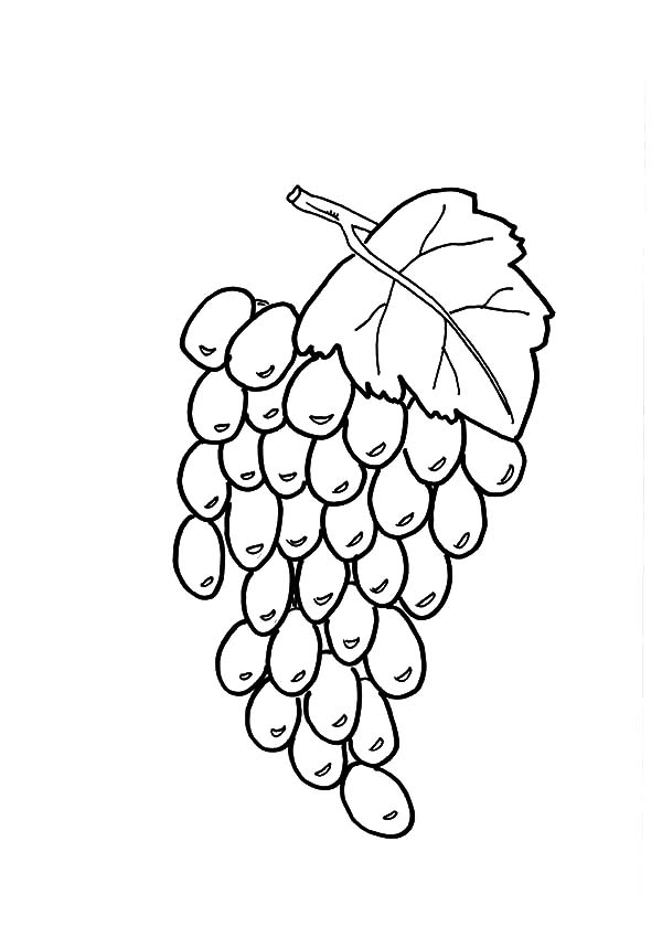 Grapes, : Healthy Fruit Grapes Coloring Pages