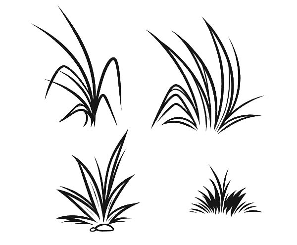 How To Draw Grass Coloring Pages