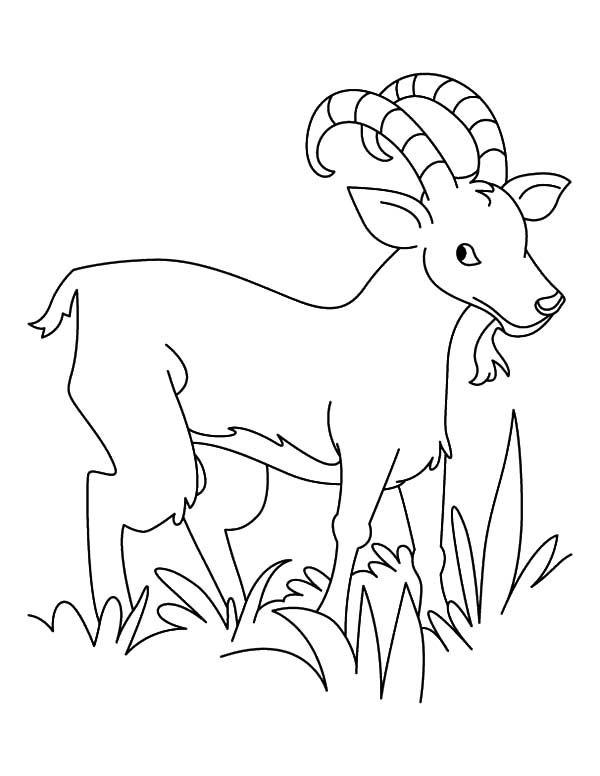 Grass, : Hungry Goat Eating Grass Coloring Pages