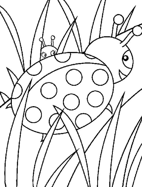 Grass, Ladybug Walking On Grass Coloring Pages: Ladybug Walking on Grass Coloring Pages