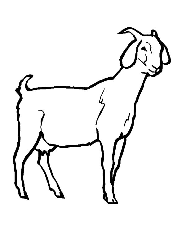 livestock goat coloring pages