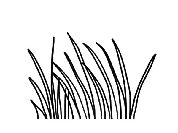 Grass, Long Grass Coloring Pages: Long Grass Coloring Pages