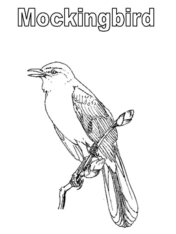 Northern Mockingbird Coloring Pages