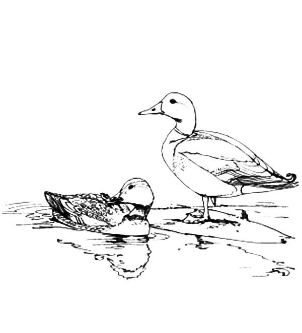 migrating birds coloring pages - photo#24