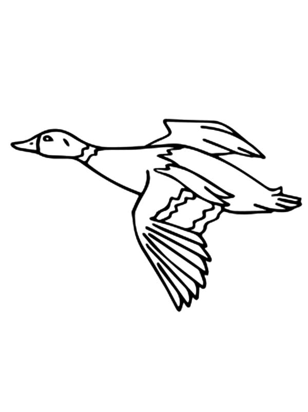 86 Coloring Pages Of Birds Migrating