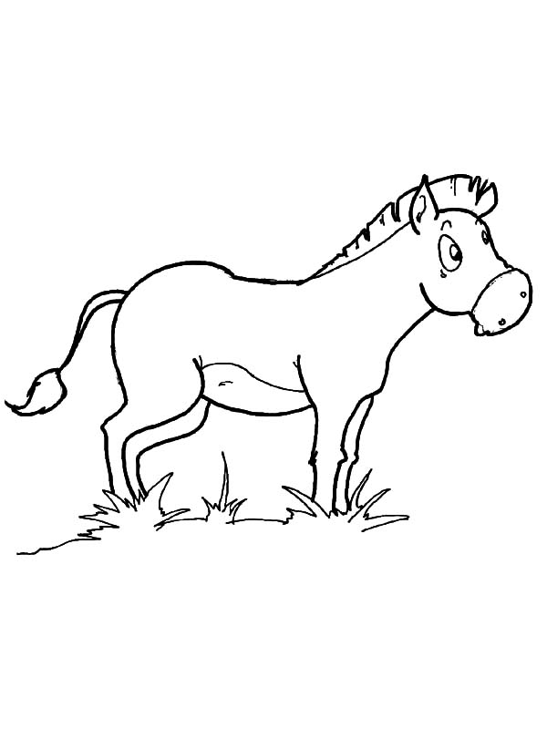 Mexican Donkey, Mexican Donkey Eating Grass Coloring Pages: Mexican Donkey Eating Grass Coloring Pages