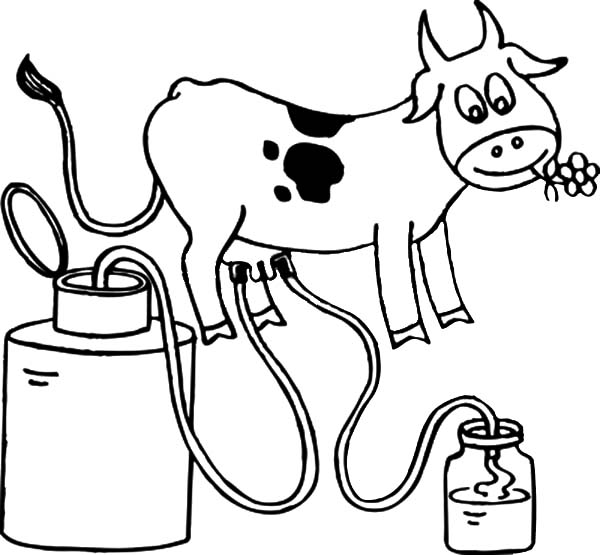 milking cow coloring pages