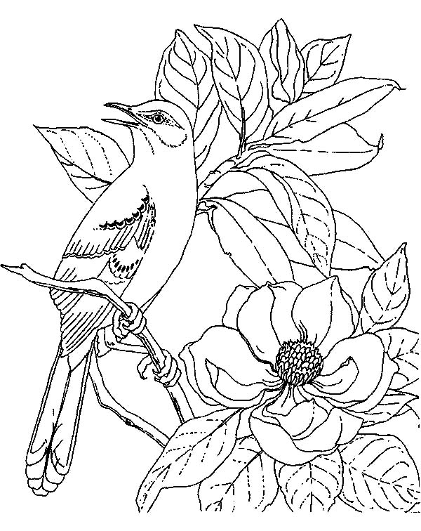 Mockingbird Calling For Her Mate Coloring Pages