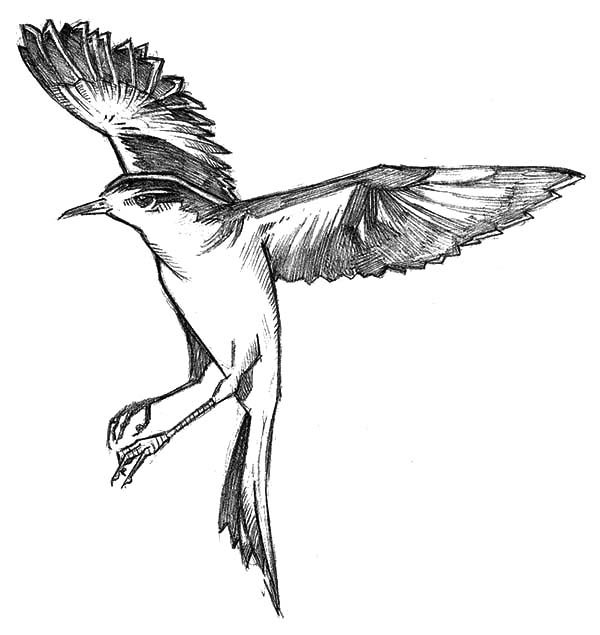 Mockingbird, Mockingbird Floating In The Air Coloring Pages: Mockingbird Floating in the Air Coloring Pages