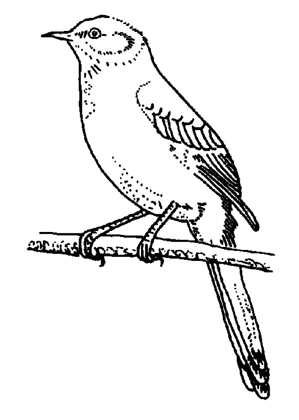 Mockingbird Perch On Tree Branch Coloring Pages