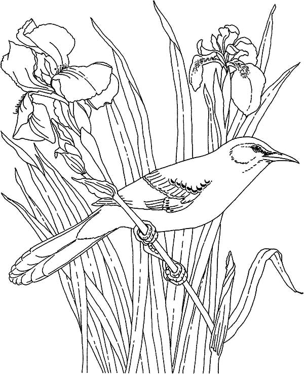 Mockingbird, Mockingbird And Beautiful Orchid Coloring Pages: Mockingbird and Beautiful Orchid Coloring Pages
