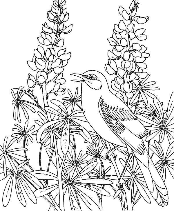 Mockingbird in the Flower Garden Coloring Pages | Color Luna