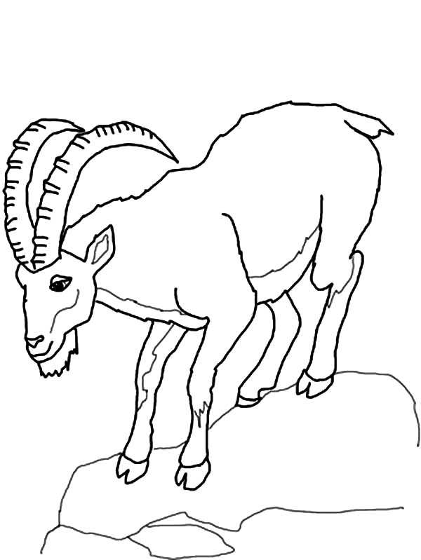 Mountain Goat, Mountain Goat Climb Down Hill Coloring Pages: Mountain Goat Climb Down Hill Coloring Pages