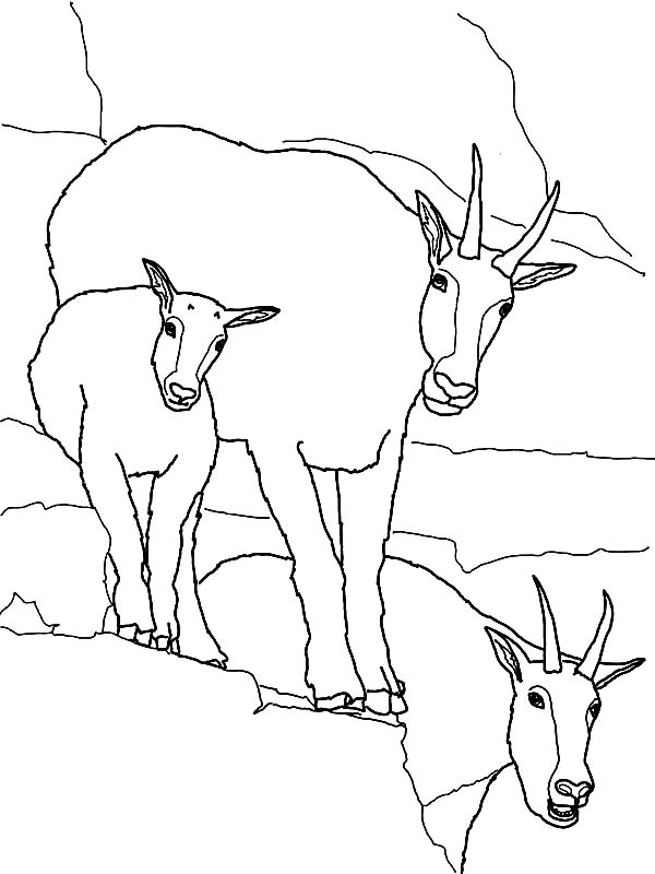 Mountain Goat, Mountain Goat Family Coloring Pages: Mountain Goat Family Coloring Pages
