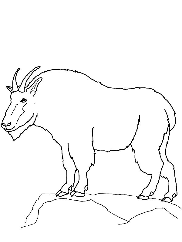 Mountain Goat, Mountain Goat Outline Coloring Pages: Mountain Goat Outline Coloring Pages