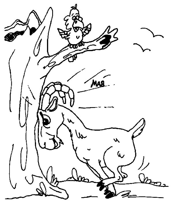 Mountain Goat, Mountain Goat Run Into Dead Tree Coloring Pages: Mountain Goat Run into Dead Tree Coloring Pages