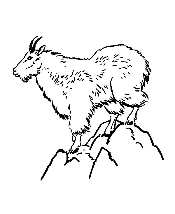 mountain goat standing on top of mountain coloring pages - Mountain Coloring Page